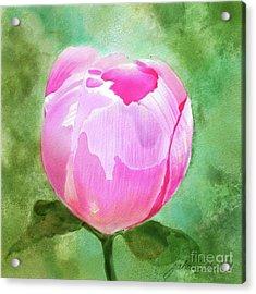 Pink Peony Bud Acrylic Print by Joan A Hamilton