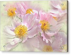 Pink Peony Flowers Parade Acrylic Print by Jennie Marie Schell