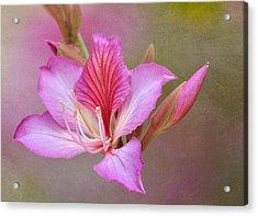 Pink Persuasion Acrylic Print by Fraida Gutovich