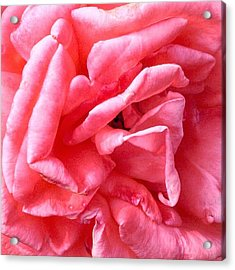 Acrylic Print featuring the photograph Pink Petals Up Close Rose Art Photo by Marianne Dow