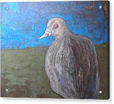 Pink Pigeon In Blue Acrylic Print by Artist Geoff Francis