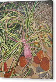 Pink Pineapple Acrylic Print by Hilda and Jose Garrancho
