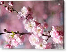 Pink Plum Branch 1 Acrylic Print