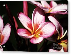 Acrylic Print featuring the photograph Pink Plumeria by Angela DeFrias