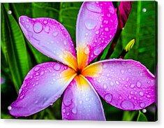 Pink Plumeria Acrylic Print by TK Goforth