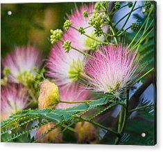 Pink Pom Poms Acrylic Print