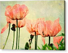 Acrylic Print featuring the photograph Pink Poppies In The Garden by Peggy Collins