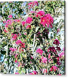 Pink Profusion Acrylic Print
