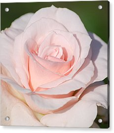 Pink Promise Acrylic Print by Nancy Edwards