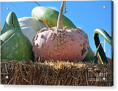 Pink Pumpkin And Friends Acrylic Print by Minnie Lippiatt