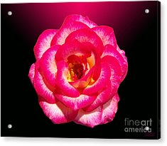 Acrylic Print featuring the photograph Pink Queen  by Hanza Turgul