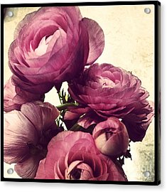 Pink  Ranunculus Acrylic Print by Heather L Wright