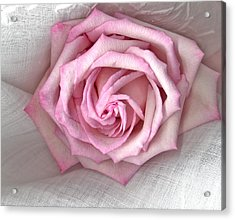 Pink Rose And Linen Acrylic Print by Sandra Foster
