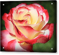 Acrylic Print featuring the photograph Pink Rose by Athala Carole Bruckner