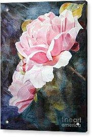 Pink Rose Caroline Acrylic Print