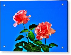Pink Rose Acrylic Print by Ed Roberts