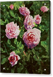 Pink Rose Acrylic Print by Helal Uddin