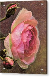 Acrylic Print featuring the photograph Pink Rose Imp 1 - Artistic Pink Rose With Buddies by Leif Sohlman