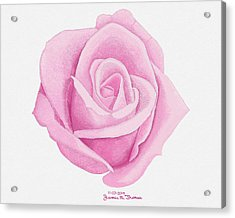 Pink Rose Acrylic Print by James M Thomas