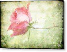 Pink Rose Acrylic Print by Joan McCool