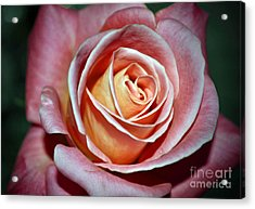 Acrylic Print featuring the photograph Pink Rose by Savannah Gibbs