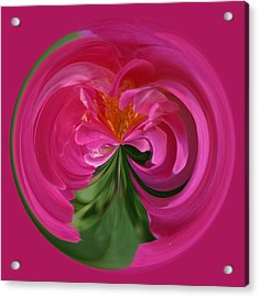 Pink Rose Series 112 Acrylic Print