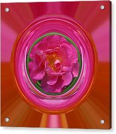 Pink Rose Series 113 Acrylic Print