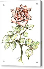 Pink Rose Acrylic Print by Teresa White