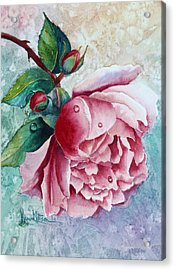 Pink Rose With Waterdrops Acrylic Print by Karen Mattson