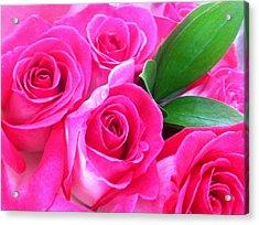 Pink Roses Acrylic Print by Alohi Fujimoto