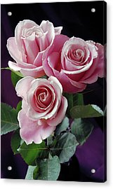 Pink Roses Acrylic Print by Anna Miller