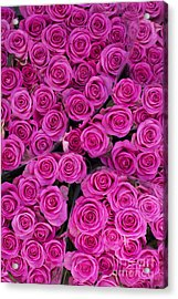 Pink Roses Acrylic Print by Tim Gainey