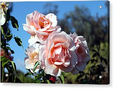 Pink Roses Acrylic Print by Valerie Broesch