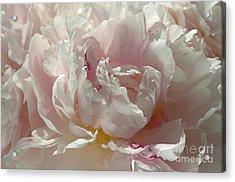 Pink Ruffles Acrylic Print