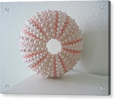 Pink Sea Urchin Still Life Acrylic Print by Patricia E Sundik