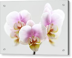 Pink Sensation Acrylic Print by Juergen Roth