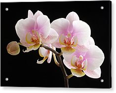Pink Sensations Acrylic Print by Juergen Roth