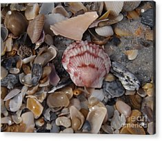 Pink Shell Acrylic Print by Brigitte Emme