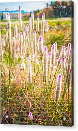 Pink Spiky Flowers With French Handwriting Acrylic Print by Karen Stephenson