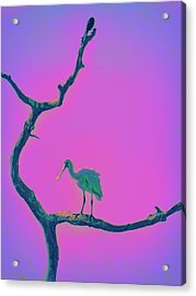 Acrylic Print featuring the painting Pink Spoonbill by David Mckinney