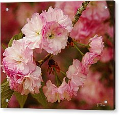 Pink Spring Blossoms Acrylic Print by James C Thomas