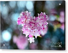 Pink Spring Heart Acrylic Print