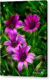 Pink  Acrylic Print by Stelios Kleanthous