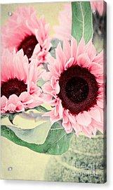 Pink Sunflowers Acrylic Print