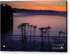 Pink Sunset Acrylic Print by Arlene Sundby