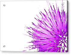 Pink Thistle  Acrylic Print by Rich Collins