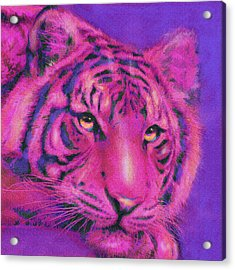 Pink Tiger Acrylic Print by Jane Schnetlage