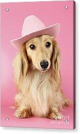 Pink Times Acrylic Print by Greg Cuddiford