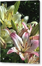 Pink To White  Acrylic Print