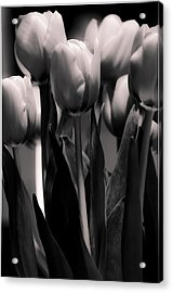 Acrylic Print featuring the photograph Pink Toned Tulips by Craig Perry-Ollila